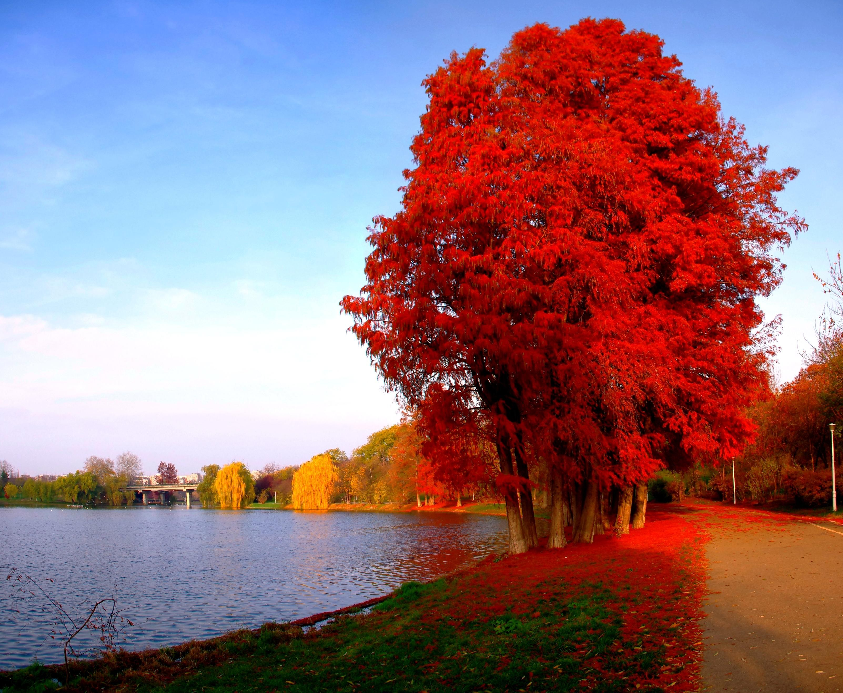Nice Autumn In Red Wallpaper Autumn Lake Nature
