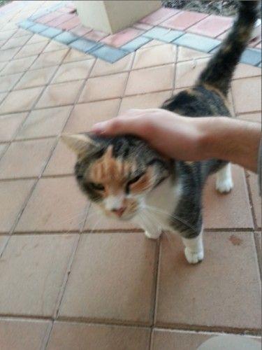 Found Tortoiseshell Female Cat Como South Perth Wa 6152 Http Shar Es Xkncy Found Cat Cat Lady Cats
