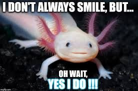 Image result for axolotl meme | Weird animals, Pink animals, Axolotl