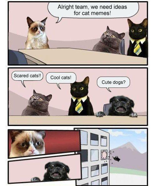 Meanwhile At The Meme Factory Cat And Dog Memes Grumpy Cat Humor Grumpy Cat