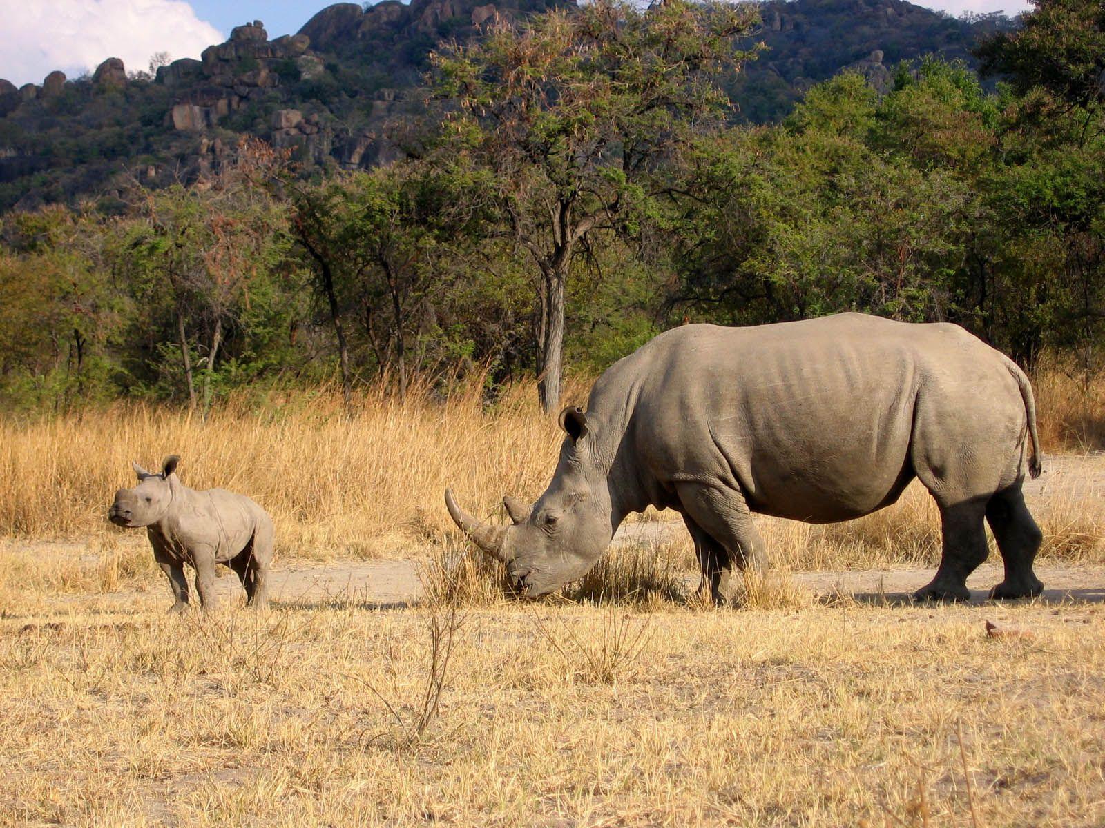 wallpapers rhinoceros wallpapers animalmammals