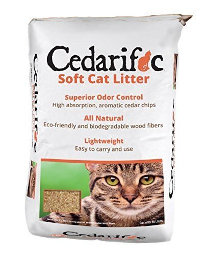 Natural Care For Keeping Dogs Cats Healthy Cedar Chips Cat Litter Best Cat Litter