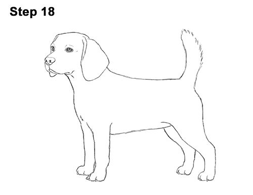 How To Draw A Beagle Video Step By Step Pictures Psy Rysunki