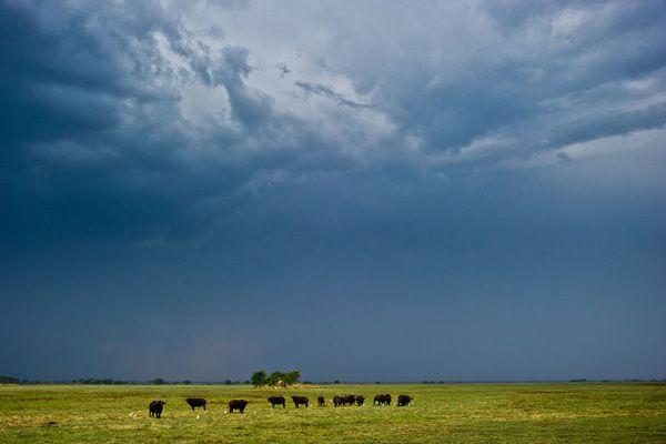 Photographic safaris in Zambia. image: Shumba Camp