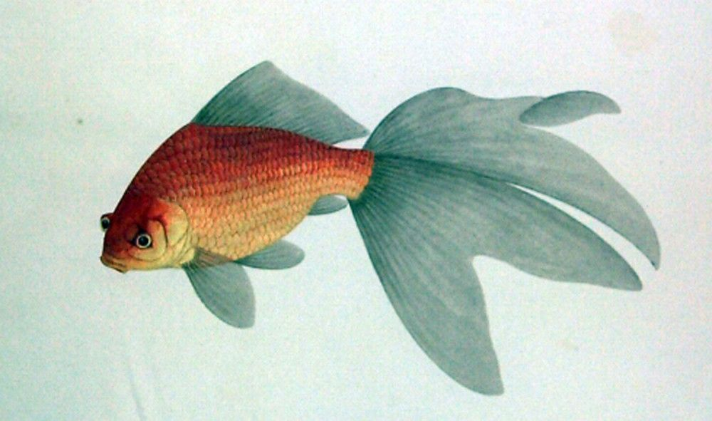 Goldfish, about 1790