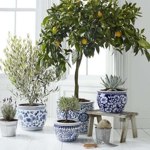 Blue White Ceramic Planter Extra Large White Ceramic 400 x 300