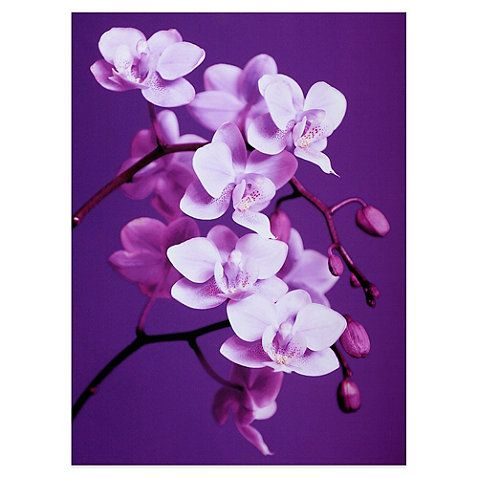 Purple Orchid Canvas Art Bedbathandbeyond Com With Images