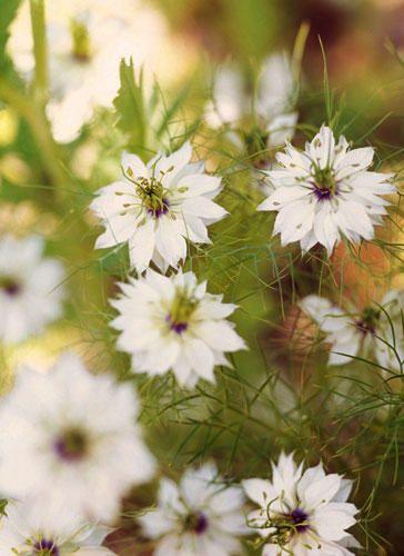 Weiße Blumen und Pflanzen