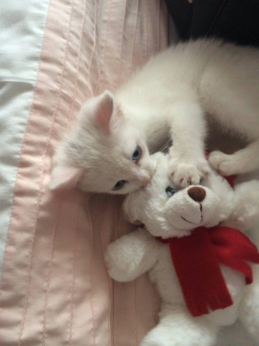 Our new rescue kitten, Luna. She's deaf. … Kitten rescue