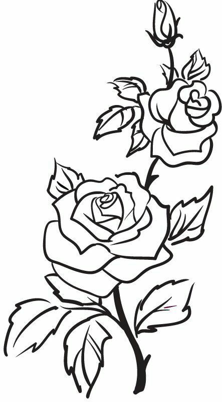 Roses Flowers Vine Leaves Bud Open Clip Art Black And