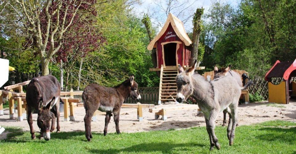 Der Esel- und Landspielhof in Nessendorf