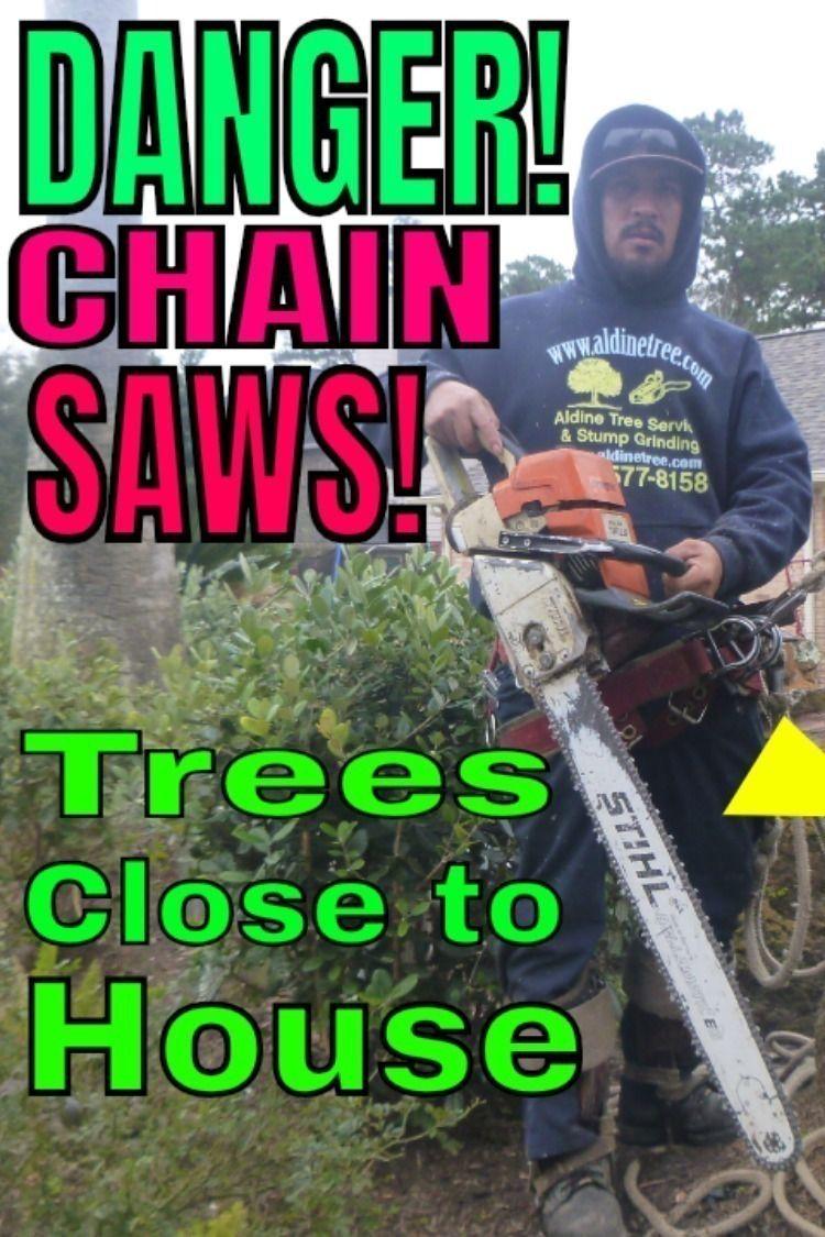 Pin On Cypress Tree Advice