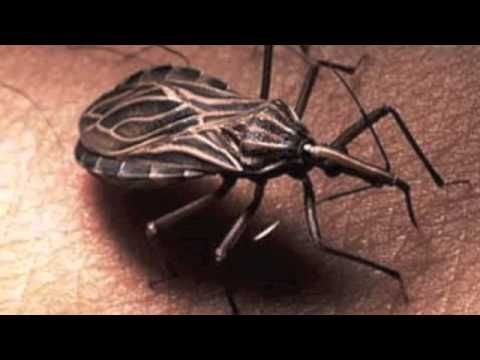 25 Parasites You Do Not Want To Be Infected With Bugs And Insects
