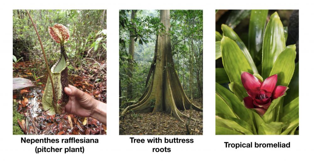 Rainforest Facts for KS2 Children and Teachers in 2020