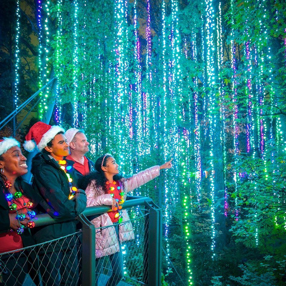 The Garden Christmas Light Displays At Atlanta Botanical