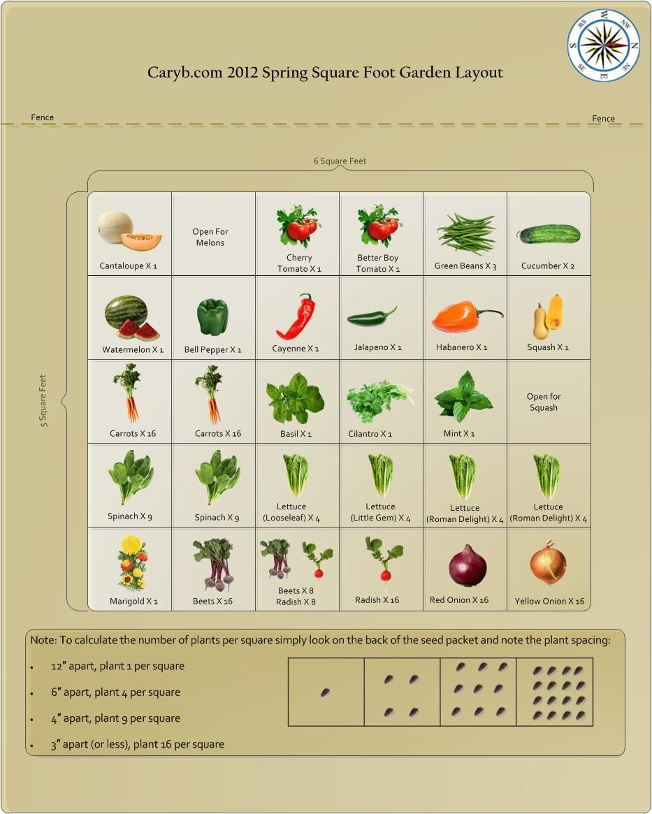 Great Info About Square Foot Gardening And How Many Plants To Fit