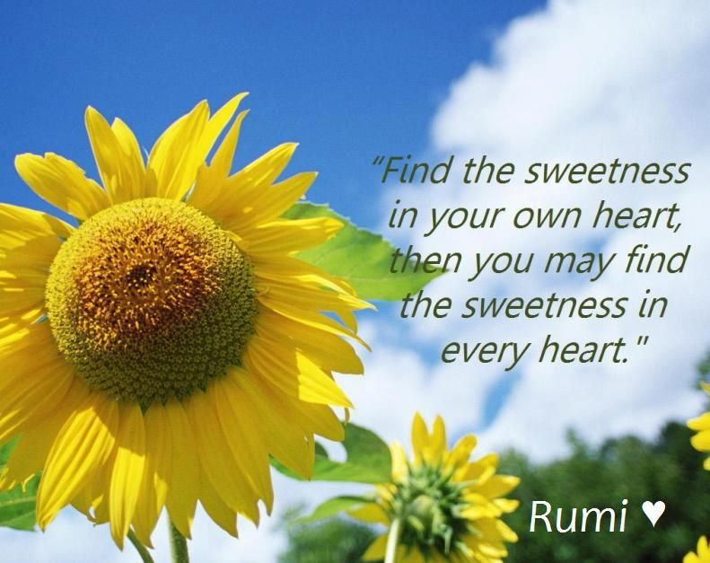 Beautiful :)   Sunflower quotes, Personal growth quotes, Rumi