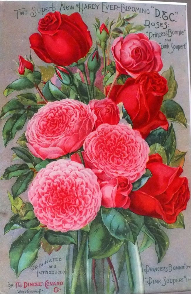 Original*Victorian*1897*Rose Seed Catalog Cover*Framed*Dingee & Conard*Flowers #DingeeConard