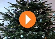 weihnachtsbaum schm cken selbstgemacht pinterest weihnachtsbaum schm cken weihnachtsb ume. Black Bedroom Furniture Sets. Home Design Ideas