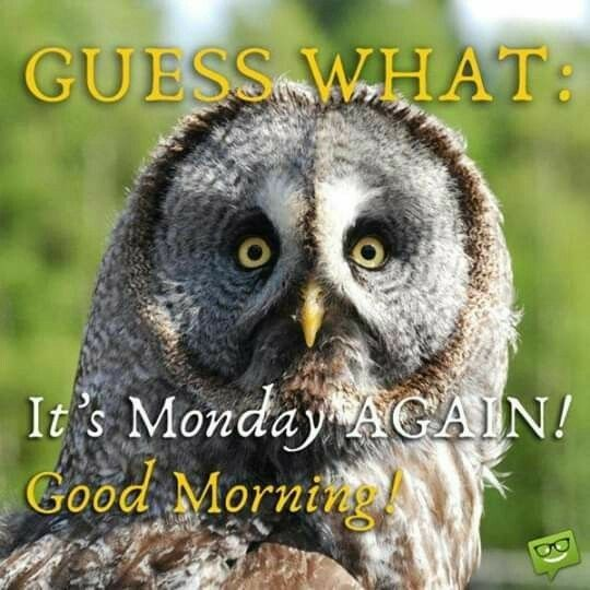 Pin by Mary Miller on Owls | Funny good morning messages