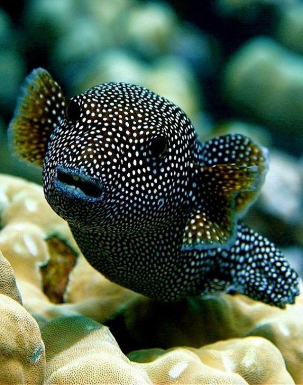 tolle bilder von fischen erstaunliche fische coole bilder. Black Bedroom Furniture Sets. Home Design Ideas