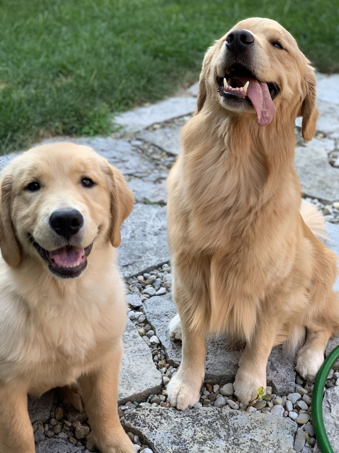 Best Friends Dogs Cute Dogs And Puppies Golden Retriever