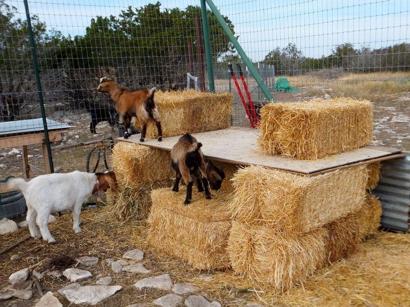 hay bale goat shelter | farm life | pinterest | goat shelter, hay