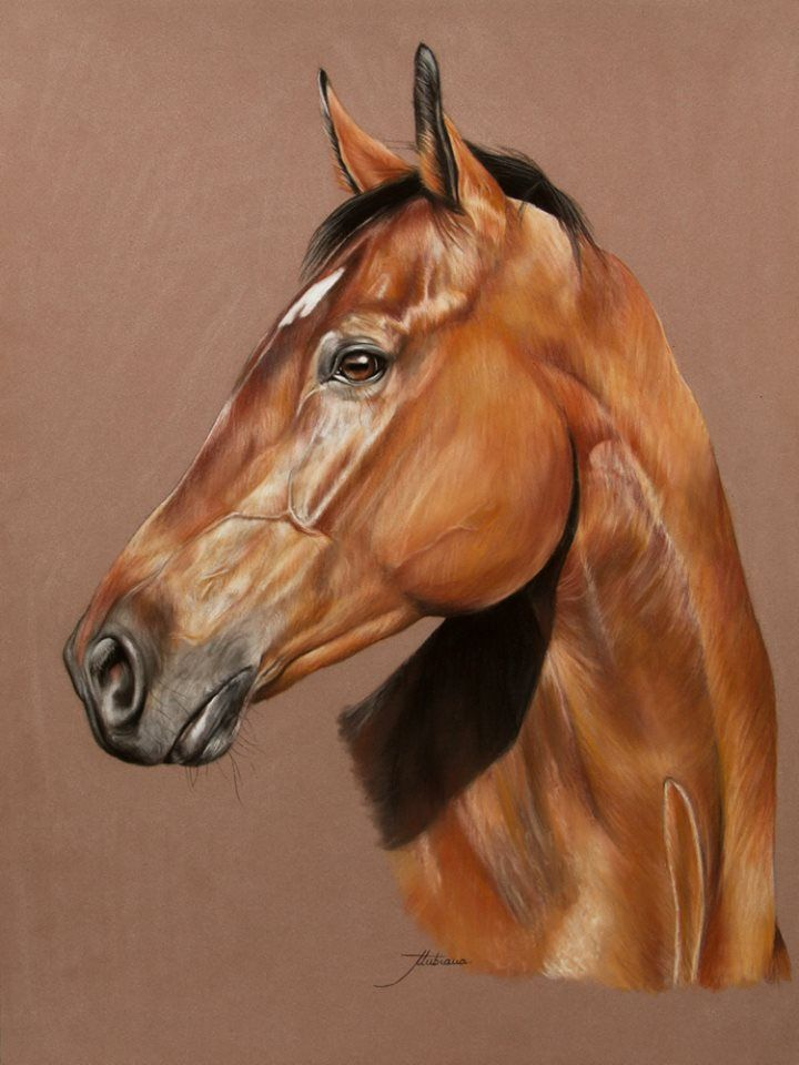 dessin cheval pinterest