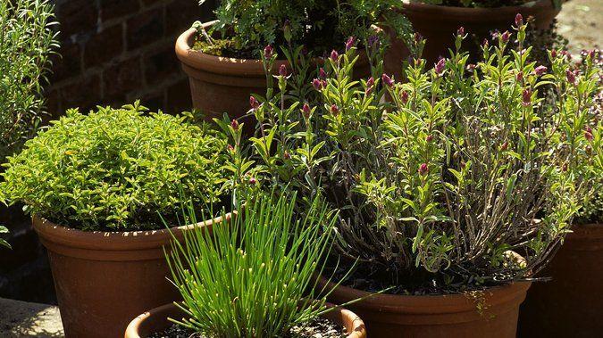 Faire Un Jardin D Herbes Aromatiques Et En Profiter Toute L Annee