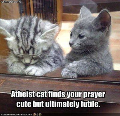 """""""Atheist cat finds your prayer cute but ultimately futile."""" (from http://imgur.com & http://godisimaginary.com)"""