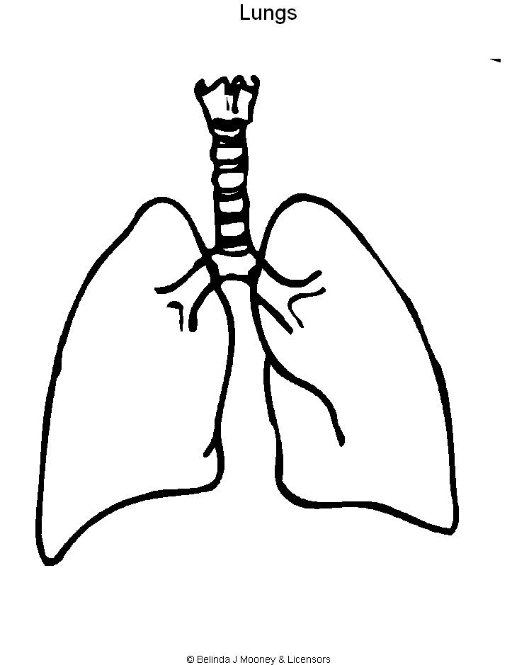 lungs coloring page Printable