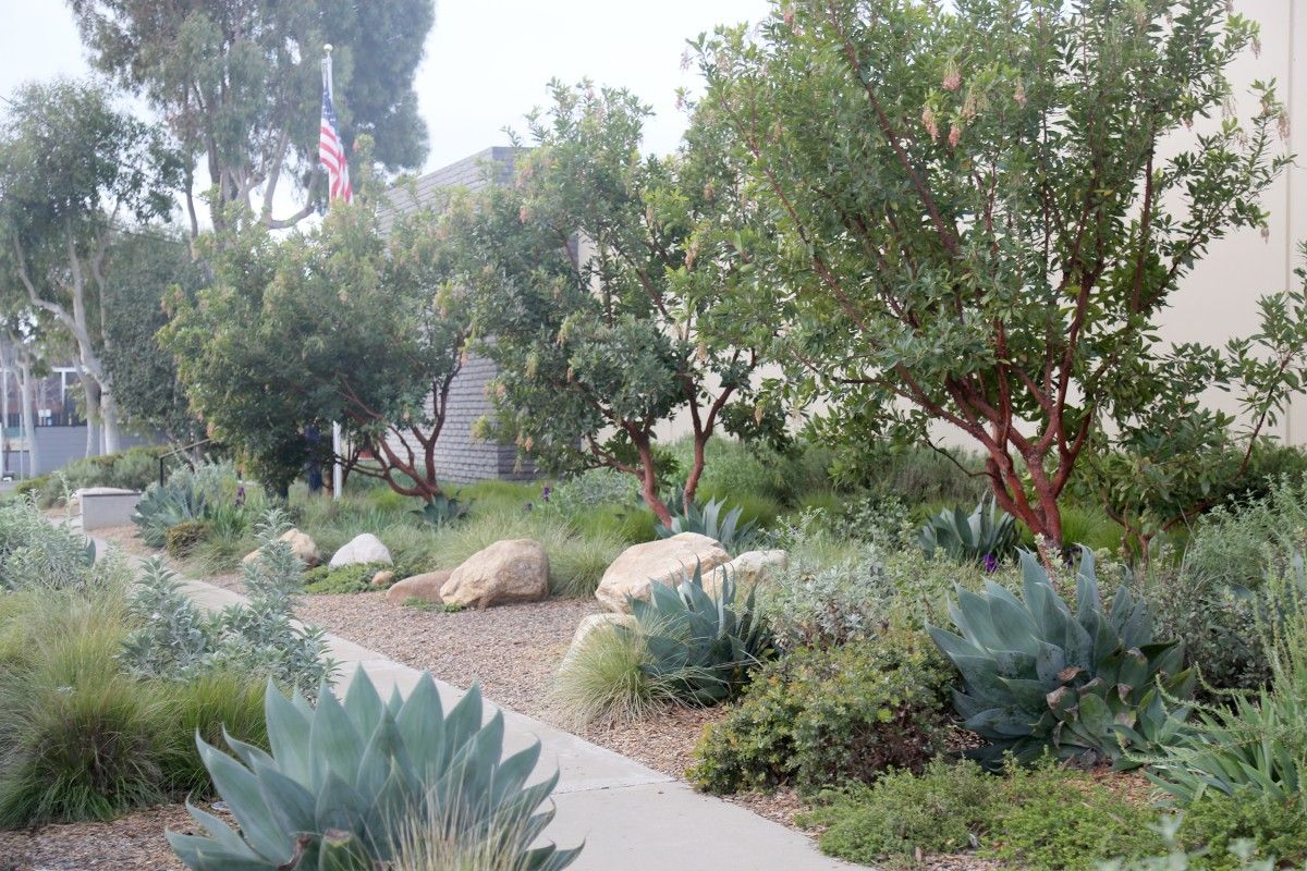 visual log of projects work at terremoto a landscape office la sf office landscaping99 office