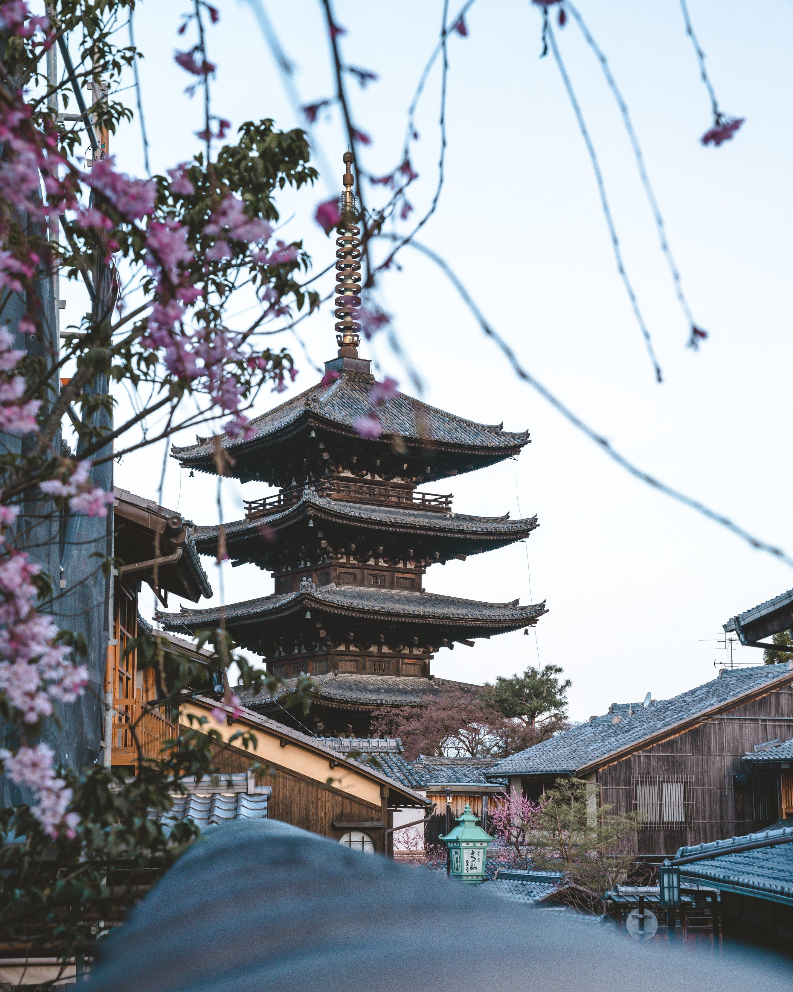 Where To See Cherry Blossoms In Osaka Nara Kyoto Kyoto Japan Cherry Blossom Kyoto Japan Travel Osaka Castle