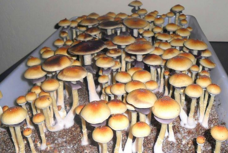 Pin by Wolverine Mountain Farms on Mushroom cultivation
