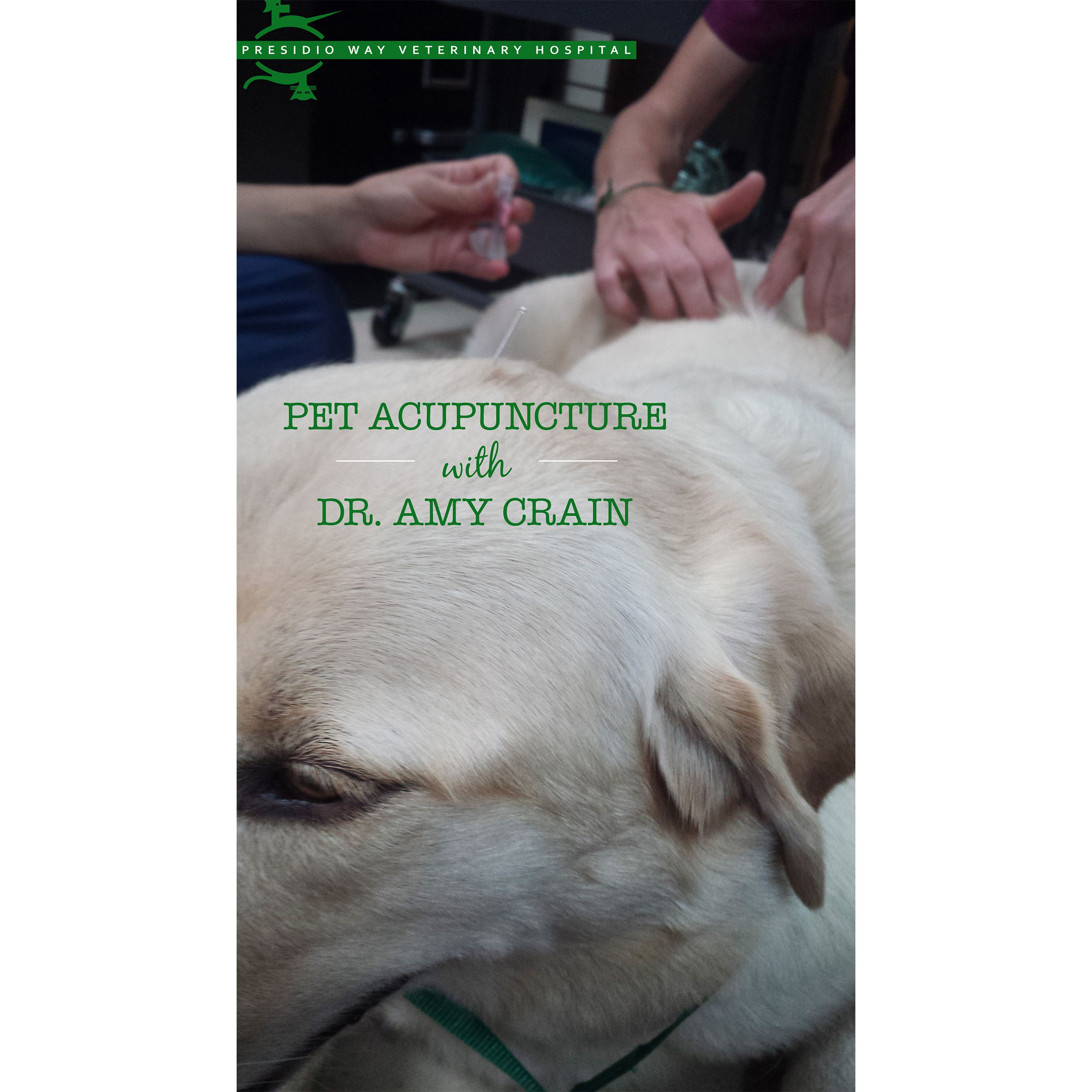 Did you know we offer veterinary acupuncture at Presidio