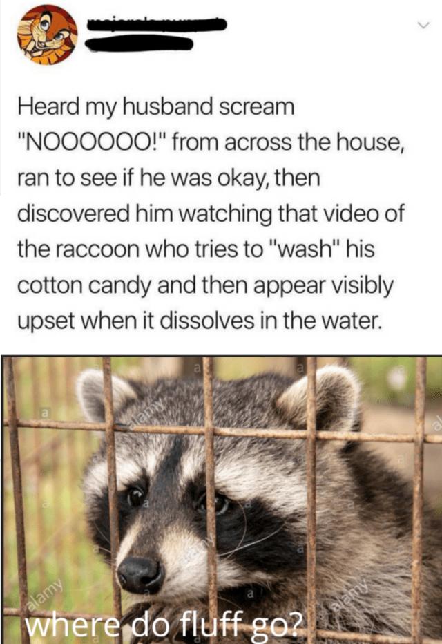 Morning Wake Up Call Fresh Animal Memes September 27th 2020 Really Funny Memes Stupid Funny Memes Funny Relatable Memes