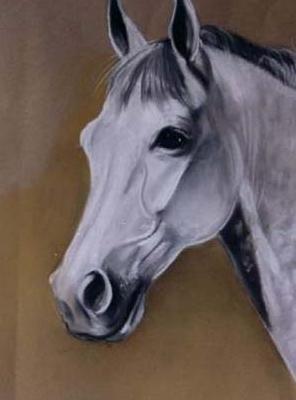 cabezacaballojpg 296400  caballos  Pinterest  Caballos