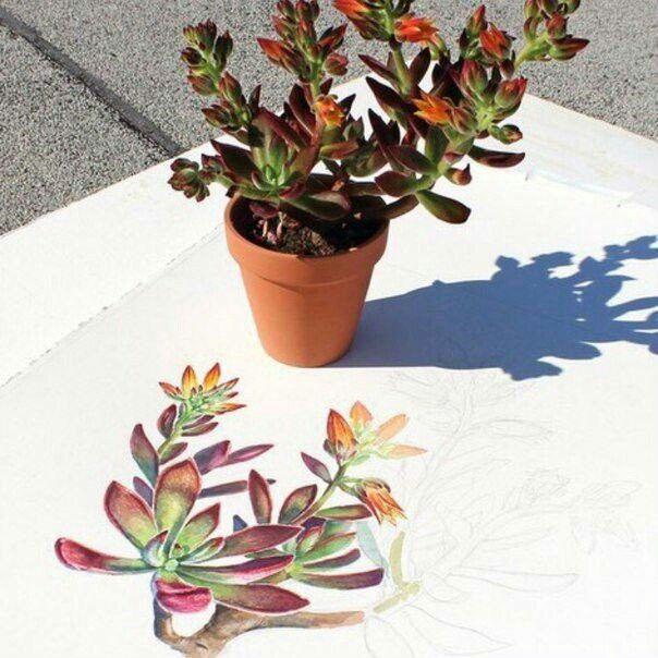 #hawortia #succulents #суккуленты