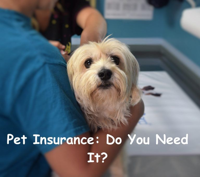 Not Sure If You Need Pet Insurance Get The Lowdown Here
