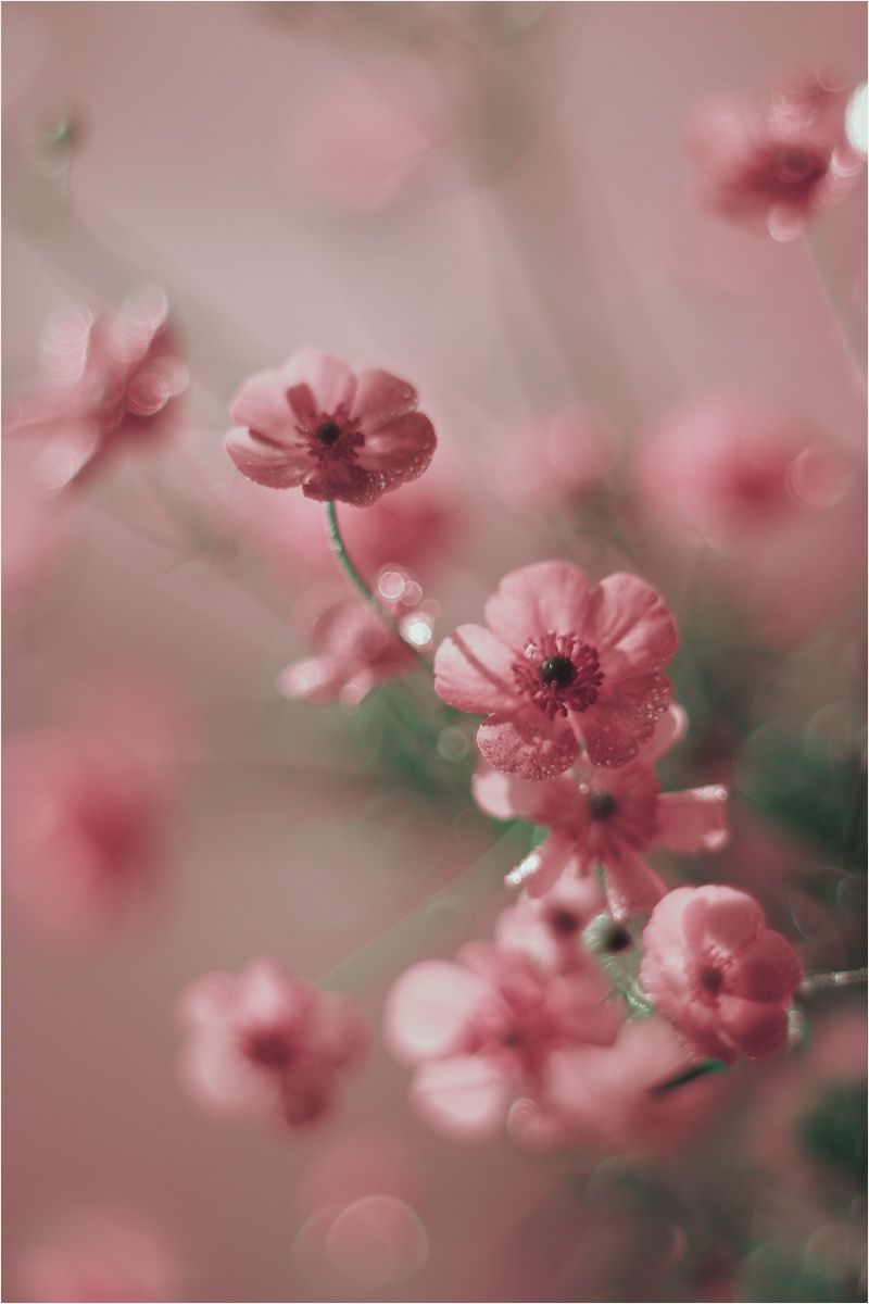 Beautiful Photography Love These Little Pink Flowers