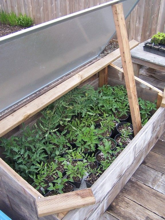 The top of this cold frame was made from a free shower door. The ...