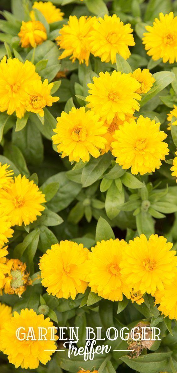 Das 4. Gartenblogger-Treffen danach! Weitere Informationen finden Sie in Volmarys #Gardenblog!, #danach #das #Finden #Gardenblog #GartenbloggerTreffen #Informationen #Sie #Volmarys #weitere