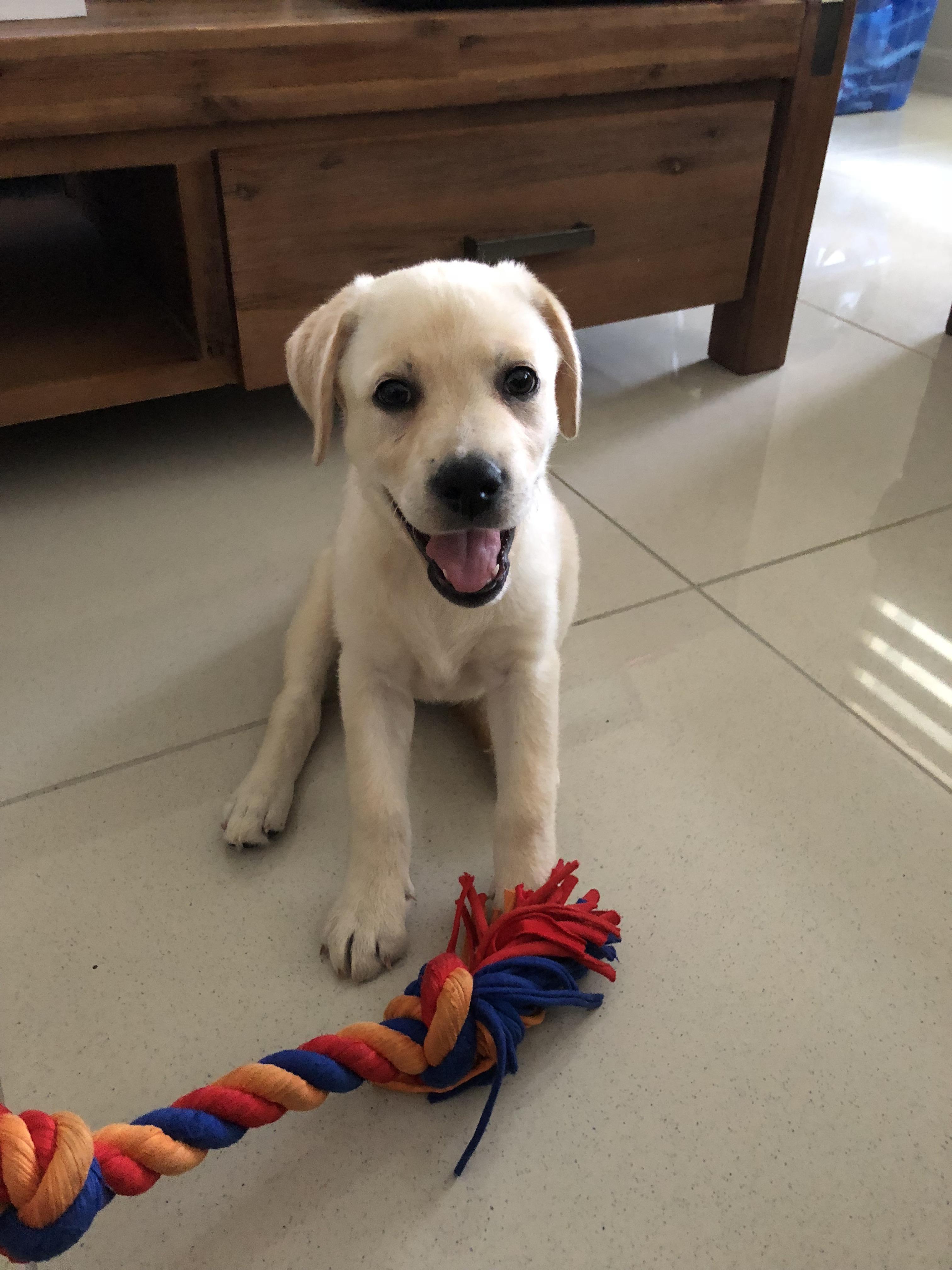 Meet 9 Week Old Zyla Please Donate Us Cute Animals Dog Lovers Labrador
