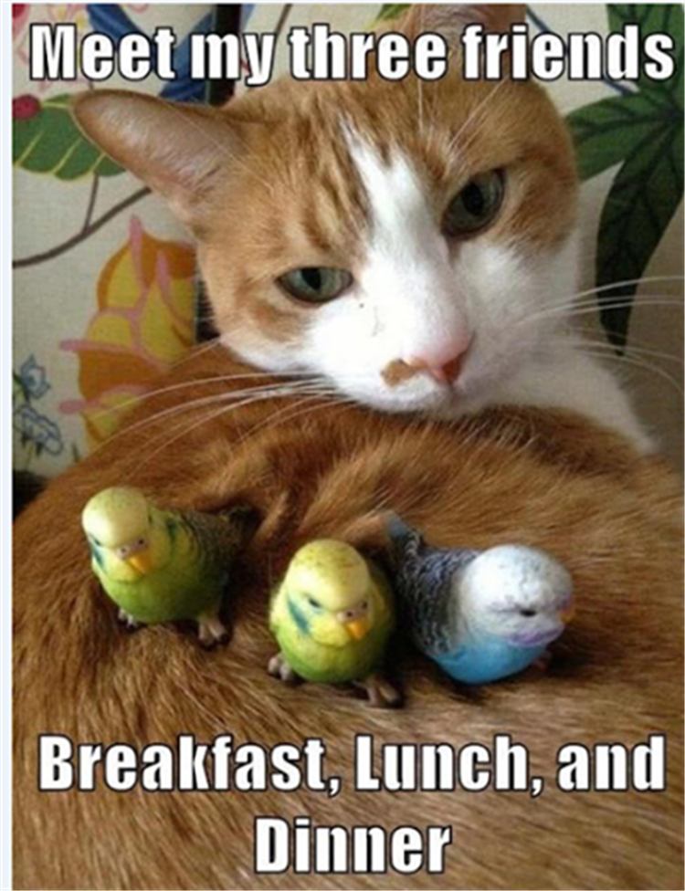 I Love Cats But Nooo Don T Eat Those Lil Budgies Funny Animals Funny Animal Pictures Funny Cat Pictures