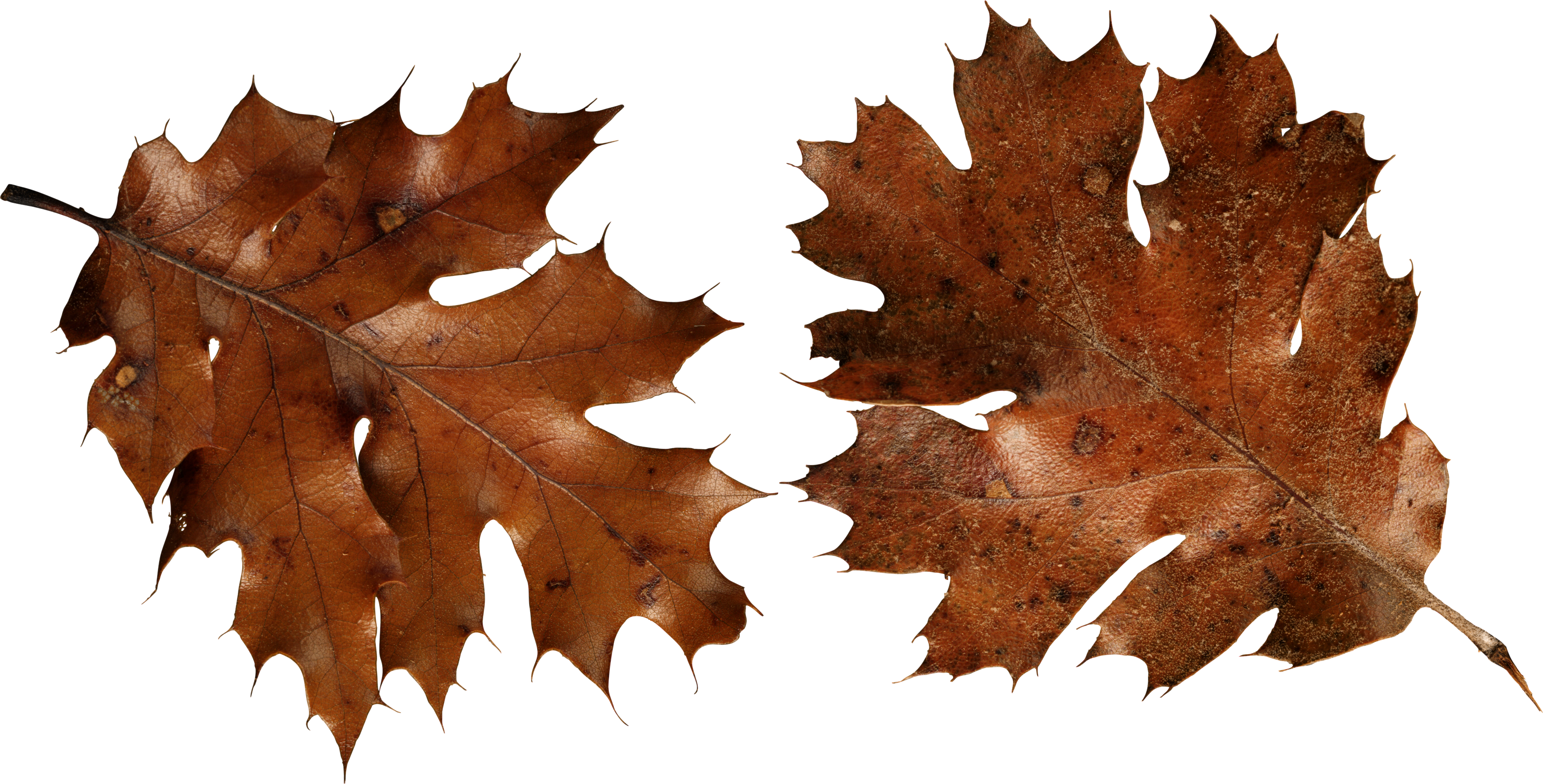 Brown Autumn Leaves Png Image Brown Aesthetic Png Autumn Leaves