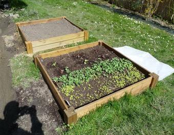 Carr s potagers jardin potager fraise carr culture salade for Amenager un potager en carre