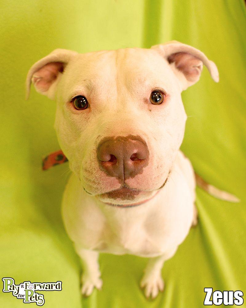 Adopt Zuess On Petfinder Dog Help Animals Dog Adoption