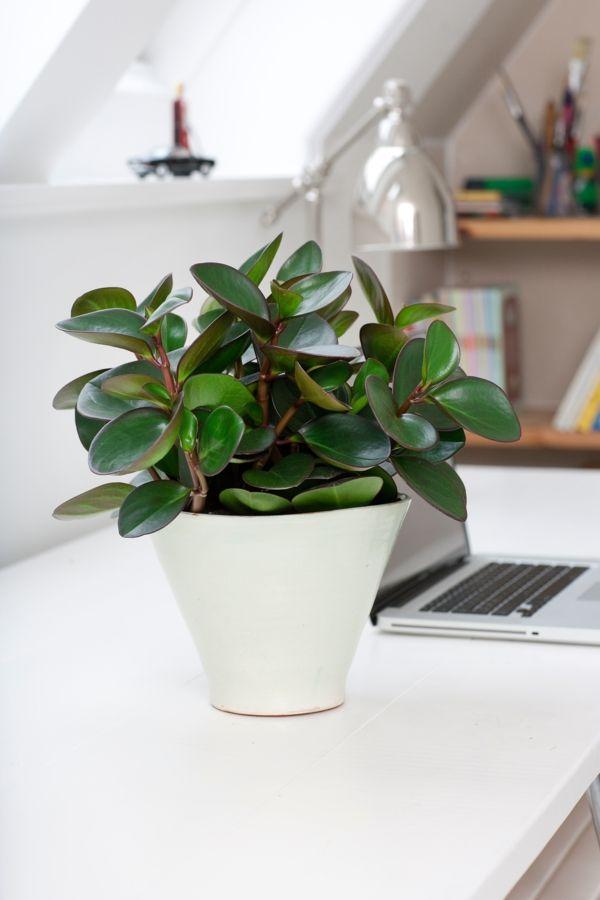 schones beliebte wohnzimmer pflanzen inserat images der efdbabdbcfbbda