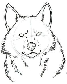 Cool Wolf Easy To Draw
