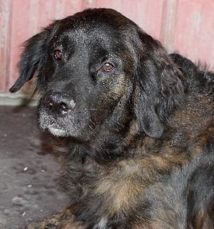 Adopt Kami on Unique dog breeds, Animals, Animal rescue